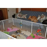 "24"" High Dog Cages Crates"